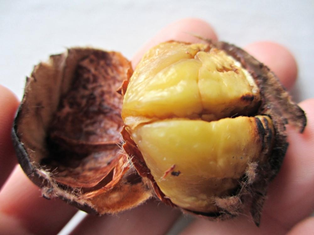 Barcelona-Christmas-chestnuts-castenyada