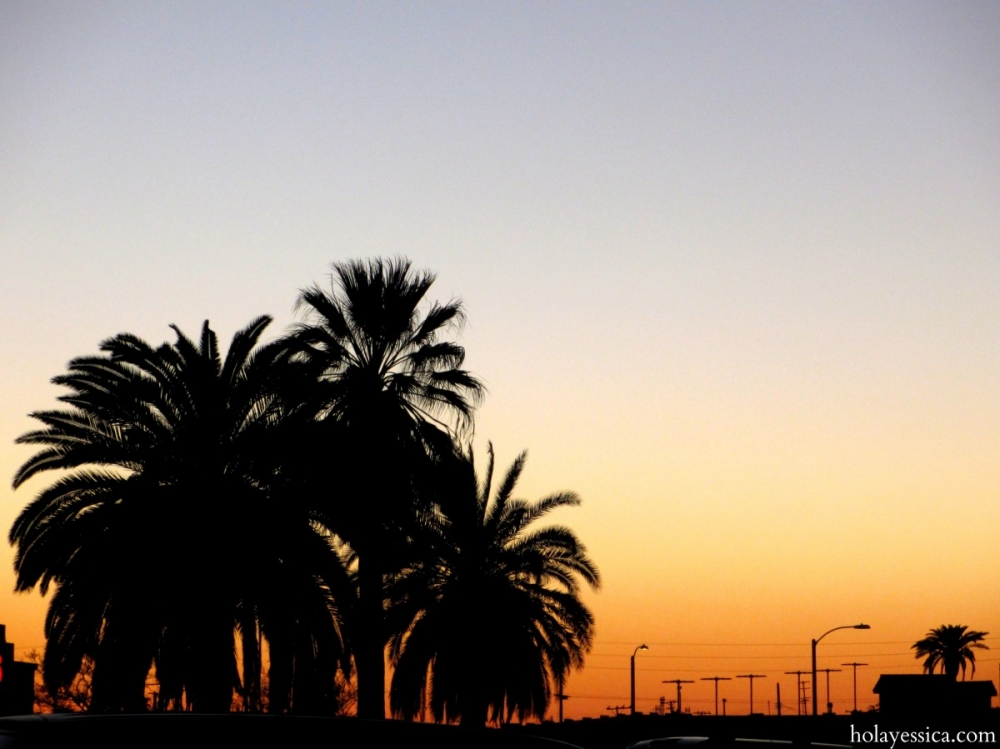 California-sunset-palm-trees