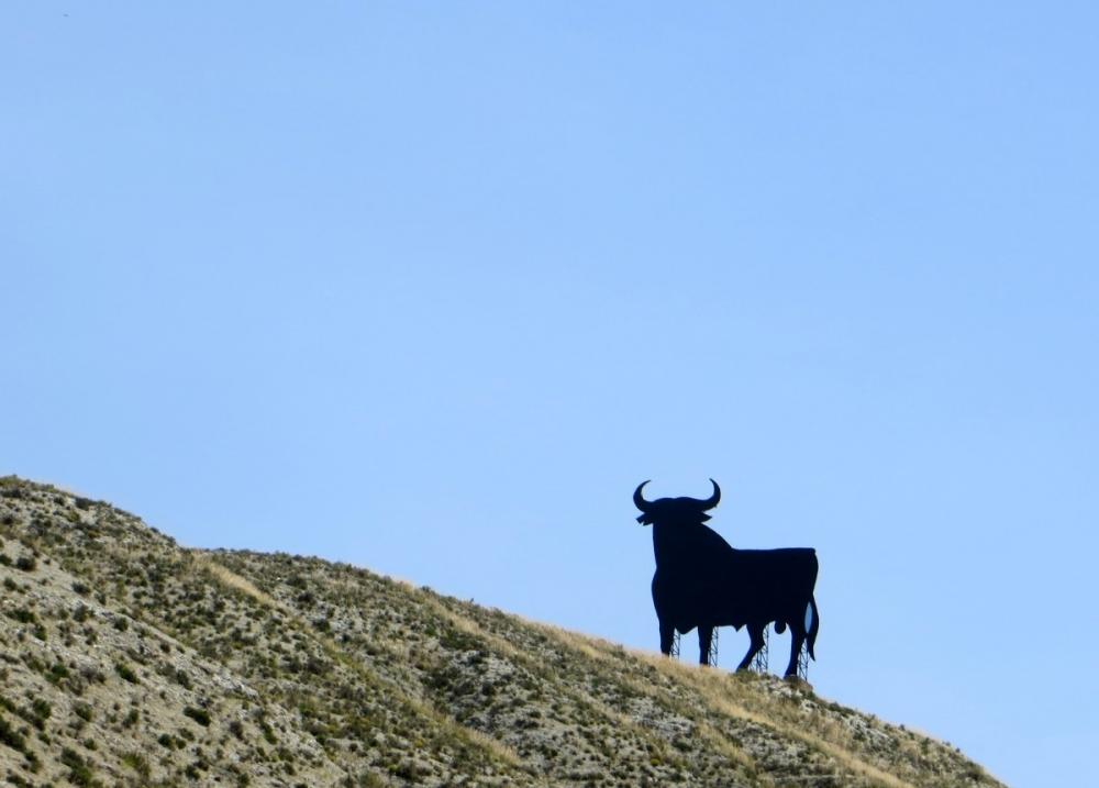 WISW: Spain's Osborne Bulls