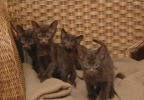 You might think these kittens are all brown, but it's just a night-vision photo. (Retrieved via Funtrest.net)