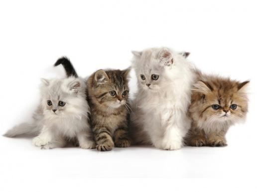 somos-cuatro-gatos