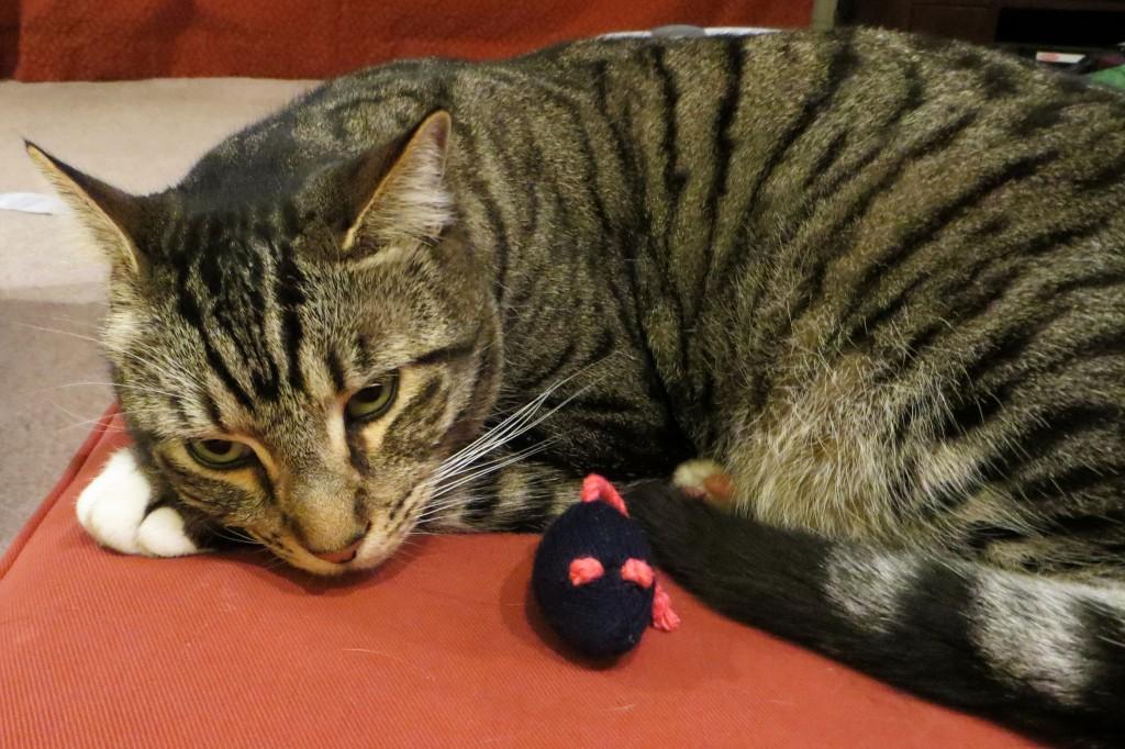 gato-con-guantes-no-caza-ratones