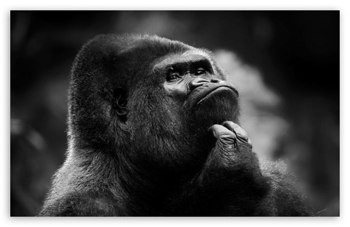 thoughtful_gorilla_bw-t2