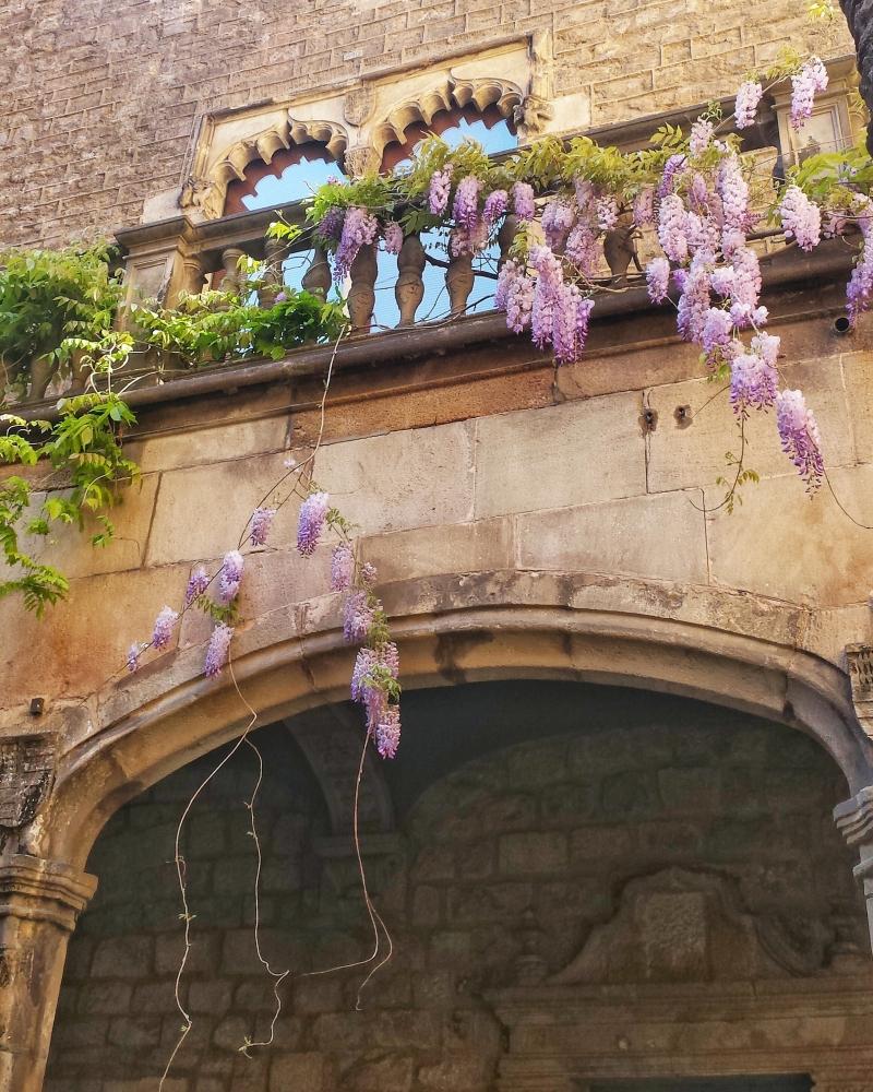 barcelona-gothic-quarter-flowers